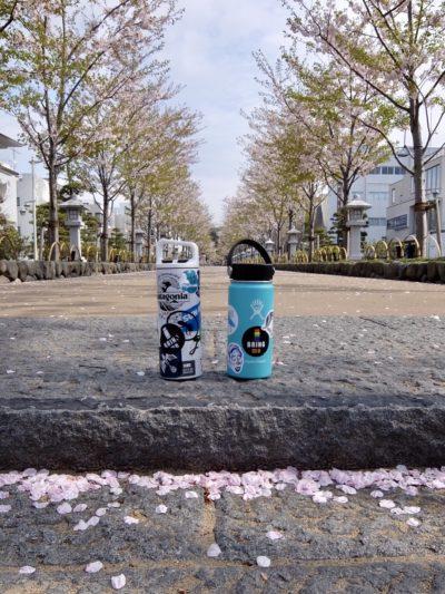 段葛の桜とマイボトル